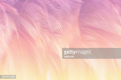 Soft focus fashion Color Trends fluffy feathers abstract texture background : Stock Photo