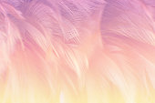 Soft focus fashion Color Trends Spring Summer fluffy feathers abstract texture background