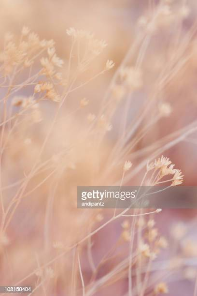 Soft Focus of Desert Plants