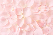 blurry background image of soft pink rose petals on table