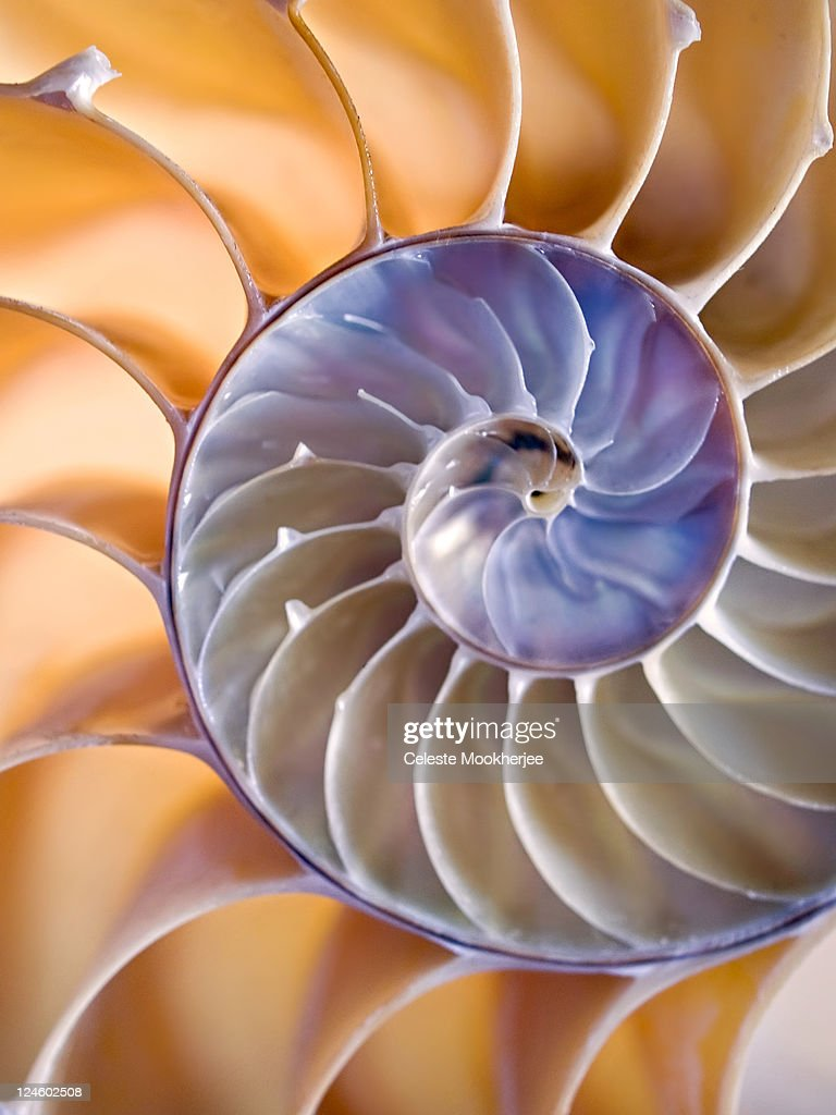 Softly lit nautilus shell