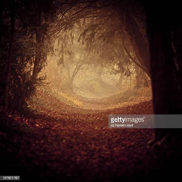 A softly lit path through shadowed woods