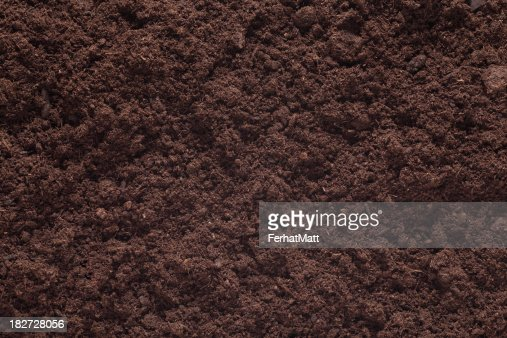 Soil Background. Brown Plant.