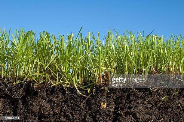soil grass sky