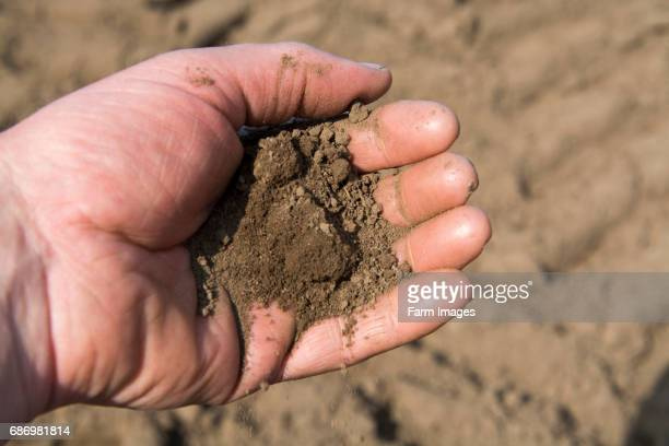Soil held in farmers hand showing the fine loam created in the seed bed ideal for growing potatoes Yorkshire UK