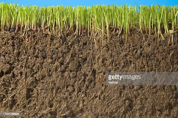 Racine du sol, l'herbe,