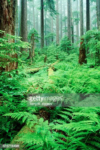 Sol Duc Rain Forest, Olympic National Park, Washington State, USA