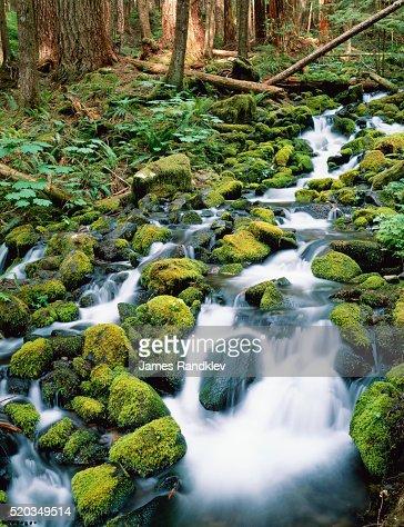 Sol Duc River Valley Stream