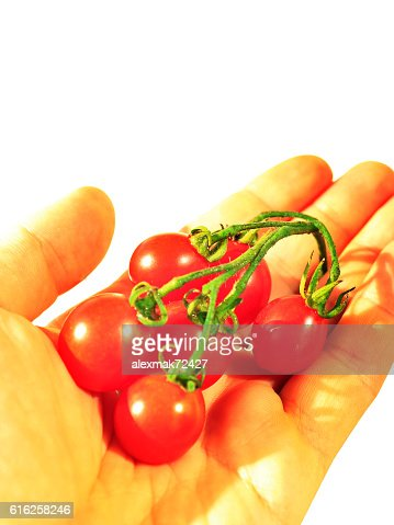 Solanum lycopersicum in the hand isolated on the white : Foto de stock