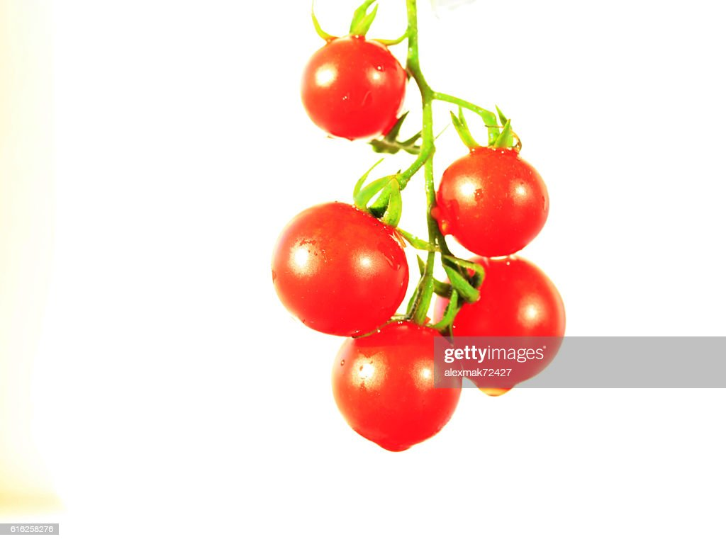 Solanum lycopersicum isolated on the white : Foto de stock