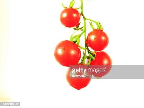 Solanum lycopersicum isolated on the white : Stock Photo