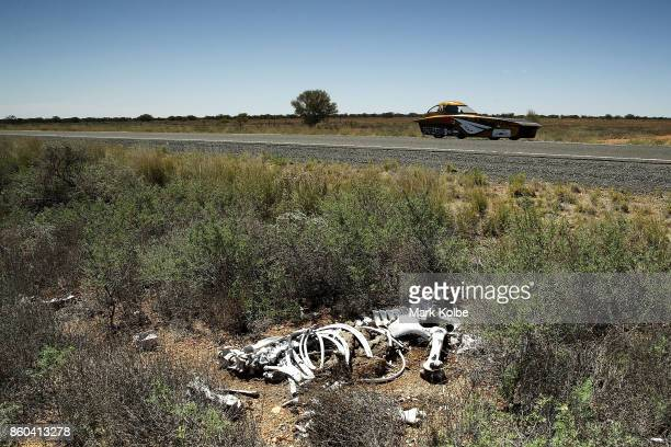 ITU Solar Car Team vehicle 'BOW ISTANBUL' from Turkey passes the bones of a dead cow as it races between Marla Bore and Coober Pedy on Day 5 of the...