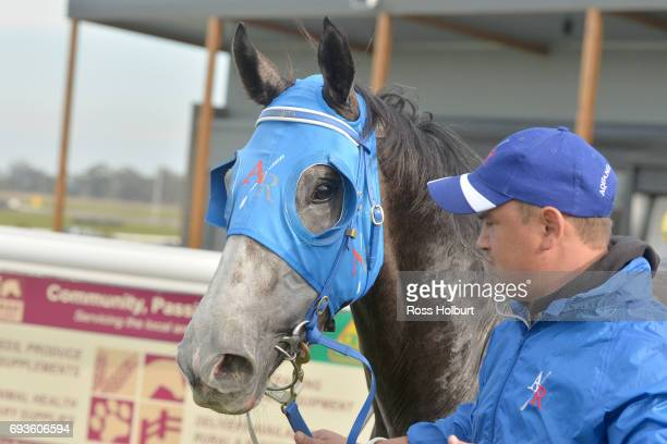 Solar Coaster after winning the XXXX Gold Maiden Plate at Racingcom Park Synthetic Racecourse on June 08 2017 in Pakenham Australia