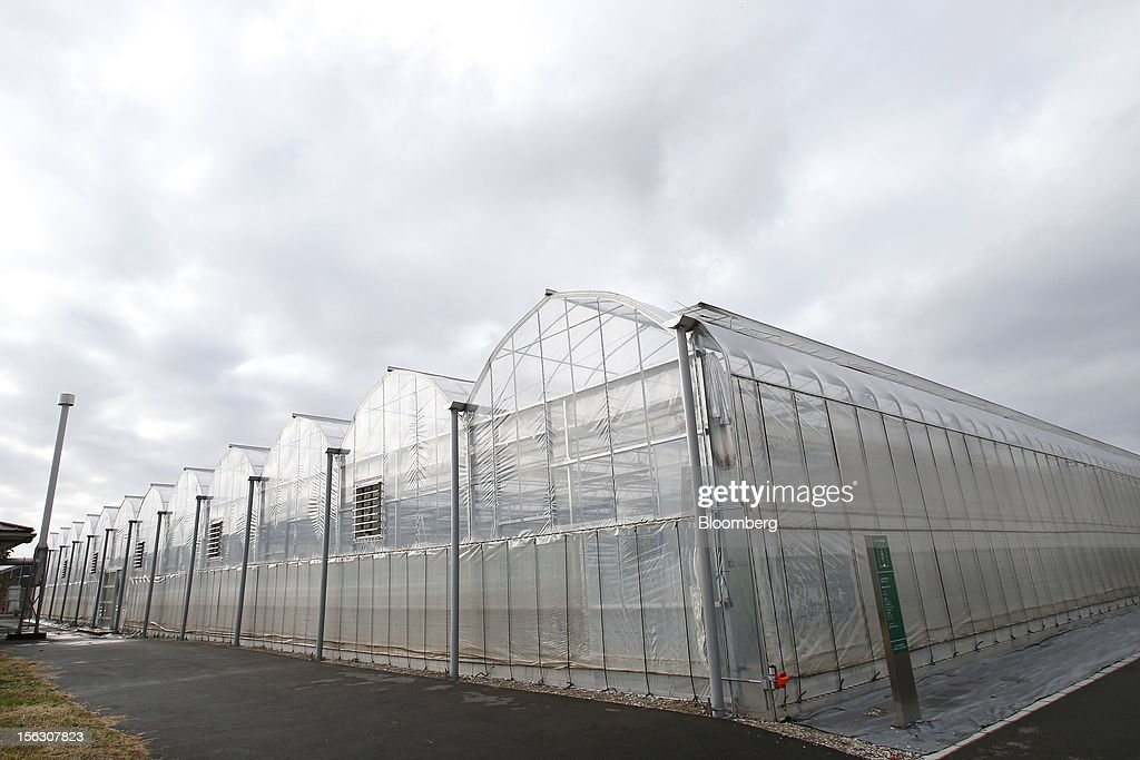 A solar light tomato 'plant factory' operated by Daisen Co. stands at the Plant Factory Center at Chiba University's Kashiwanoha campus in Kashiwa City, Chiba Prefecture, Japan, on Monday, Nov. 12, 2012. Japanese consumers are closing their wallets as the economy's outlook darkens, making it harder for Prime Minister Yoshihiko Noda to stave off the nation's third recession in four years. Photographer: Kiyoshi Ota/Bloomberg via Getty Images
