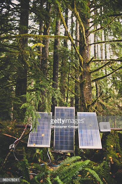 Solar panels set up in a lush forest.