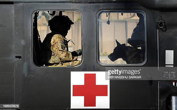 A US soldier from the 10th Combat Aviation Brigade looks on as a military working dog sits inside the cabin of a UH60 Black Hawk medevac helicopter...