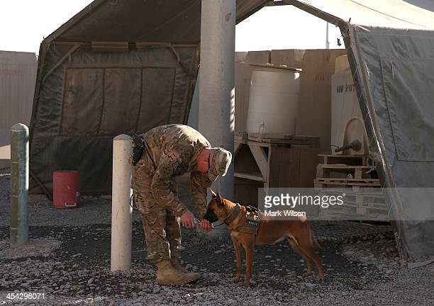 S soldier gives his guard dog water at the Kandahar Air Base on December 8 2013 in Kandahar Afghanistan Secretary of Defense Chuck Hagel traveled to...