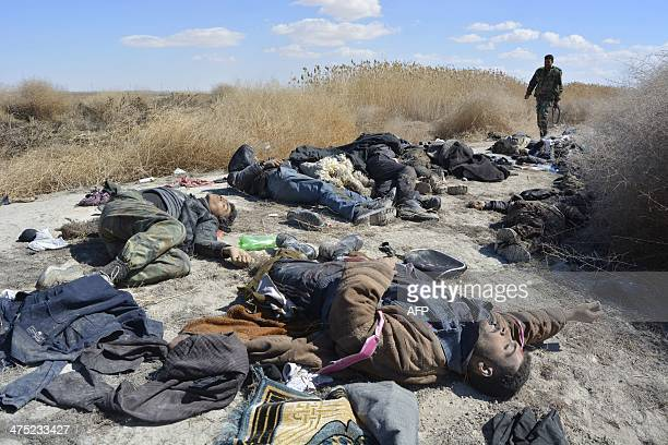 A soldier loyal to Syrian President Bashar alAssad walks near corpses of dozens of rebel fighters in the area of Oteiba east of the Syrian capital...