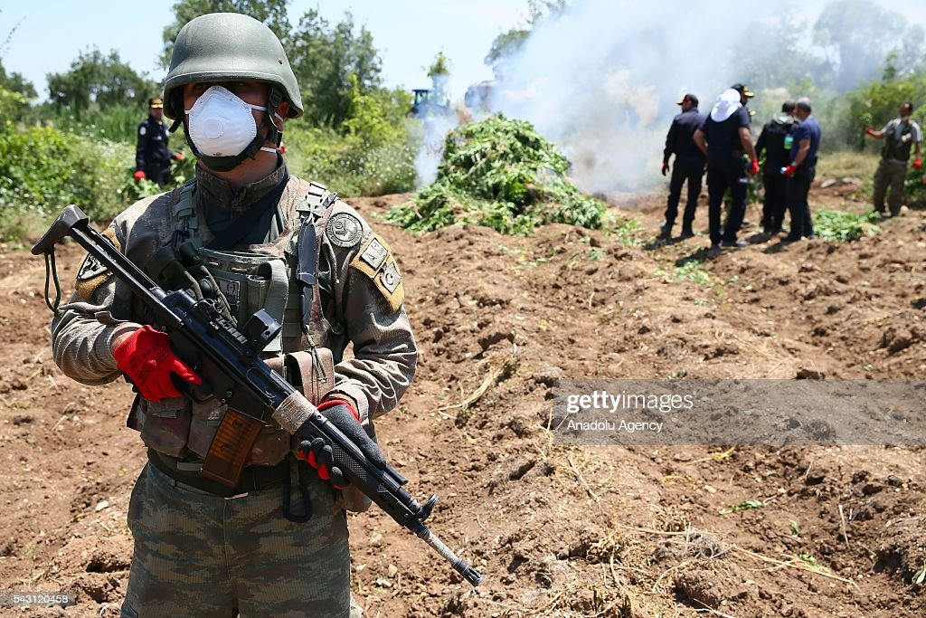 A soldier stands guard as members of the 'Flag-14 Martyred Gendarme Lieutenant Abdulselam Ozatak Joint Special Forces' destroy cannabis fields during an operation in Diyarbakir, Turkey on June 26, 2016. The 'Flag-14 Martyred Gendarme Lieutenant Abdulselam Ozatak Joint Special Forces Operation' continues, with 24 batallions under the 7th Diyarbakr Corps Command in Lice and surrounding areas. The operation, begun in mountain and forest areas where high ranking terrorist commanders are believed to be sheltering, aims to render terrorists ineffective, destroy areas of cannabis cultivation that serve as sources of finance for the terrorist organization and take apart shelters and depots, and continues with its successes. As part of the operation, 6 million 438 thousand cannabis plants have been uprooted and destroyed. The aim is to dry up one of the biggest sources of finance for the PKK terrorist organization.