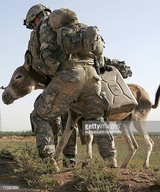 US soldiers from Alpha Company of 1/38 Infantry Regiment lead a donkey during a clearing operation outside Baquba 09 October 2007 some 50 kilometres...