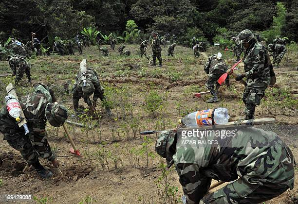 Soldiers of the Joint Task Force destroy coca plantations in the Madidi National Park in northeastern Bolivia about 365 km northwest of La Paz on May...