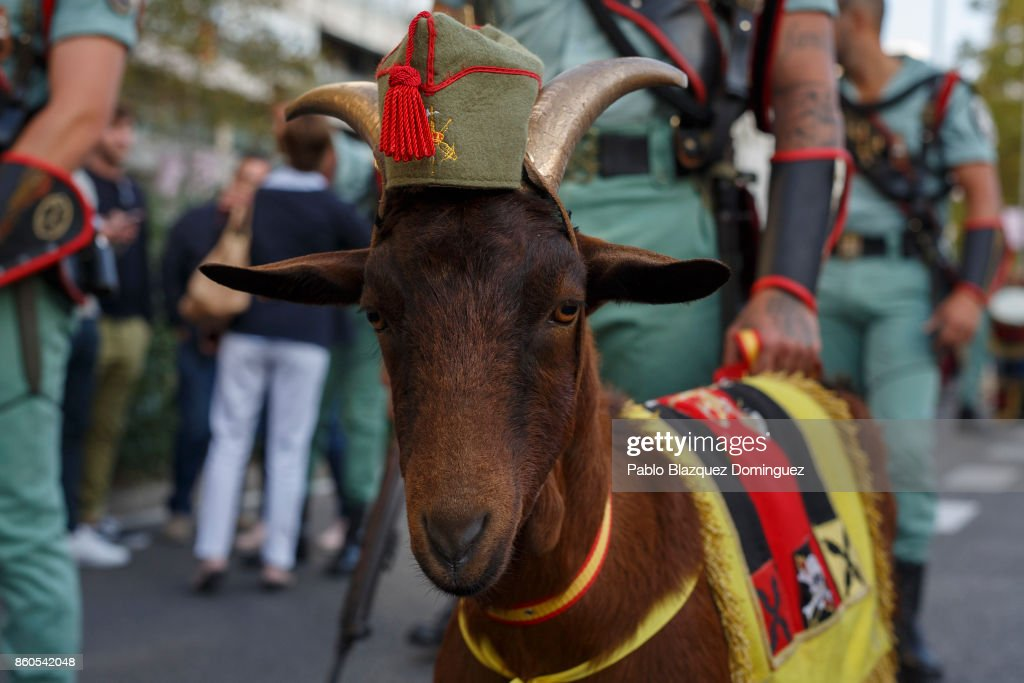 soldiers-of-the-spanish-legion-and-their-mascot-goat-wait-for-the-of-picture-id860542048