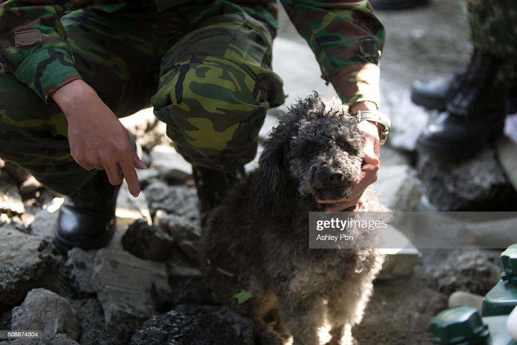 A solider looks after a poppy whose owner killed from the earthquake on February 7, 2016 in Tainan, Taiwan. A magnitude 6.4 earthquake hit southern Taiwan early Saturday, toppling several buildings, killing at least fourteen people, and leaving over one hundred missing in Tainan.