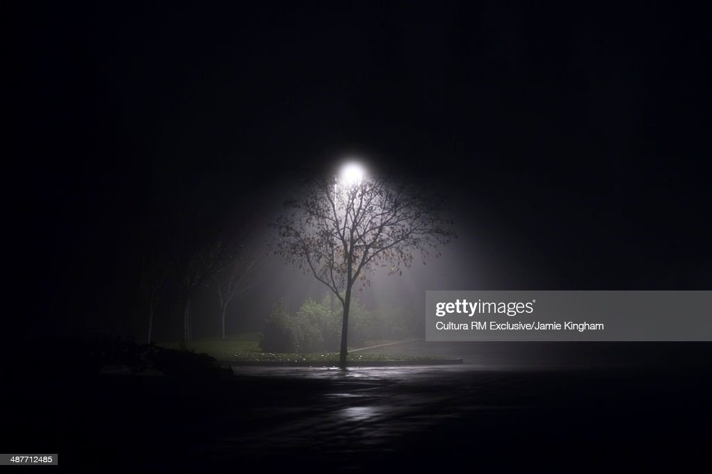 Solitary floodlit  tree at night : Stock Photo