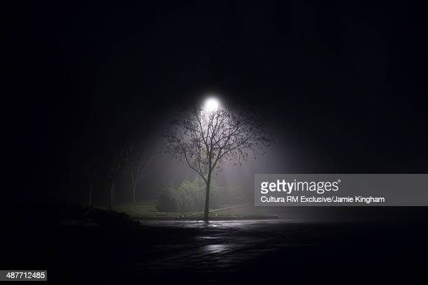 Solitary floodlit  tree at night