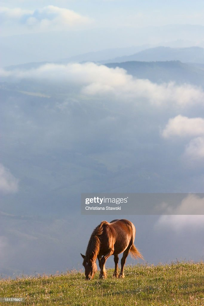 Solitary horse grazing on mountain : Stock Photo