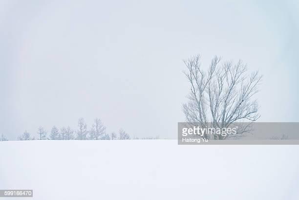Solitary tree near Biei, Hokkaido, Japan.