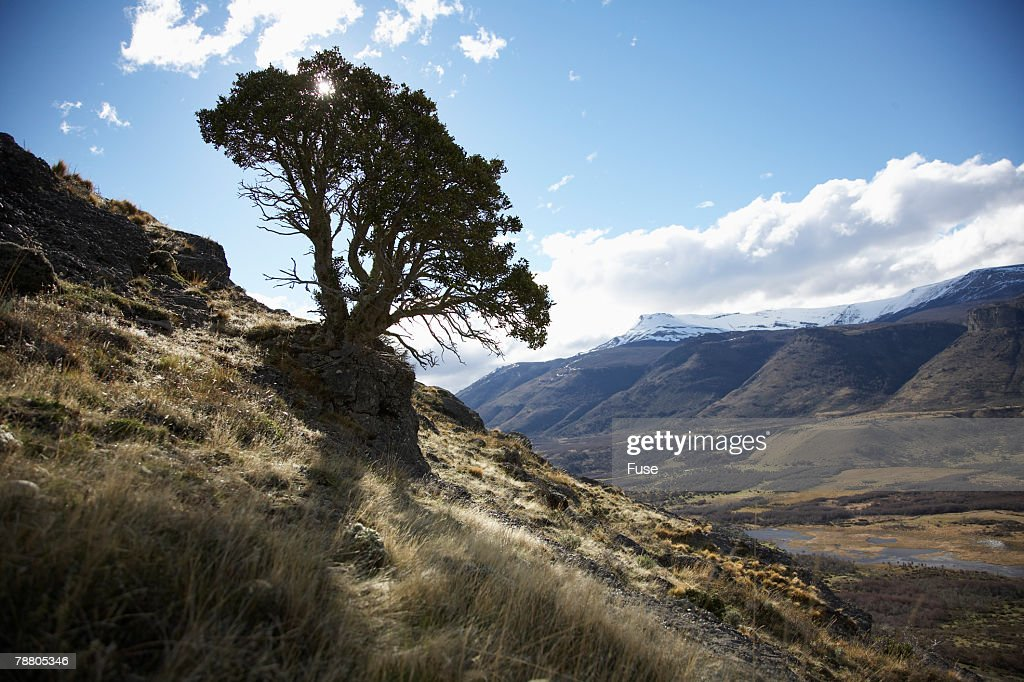 Solitary Tree on a Hillside : Stock Photo