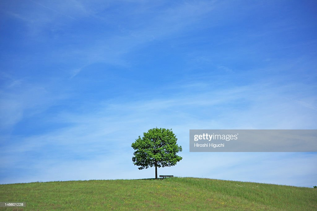 Solitary tree : Stock Photo
