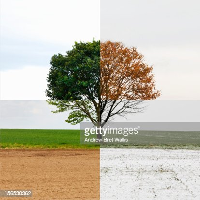 Solitary tree shown in all four seasons
