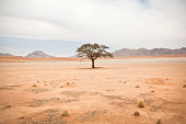 Remote tree photographed in Namibia. Pastel colored picture of solitary tree with leaves in desert with mountain range in background.