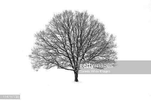 Solitary winter tree