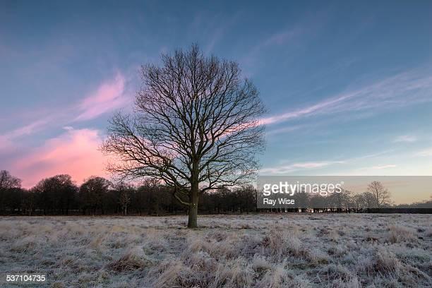 Solo tree in sunrise