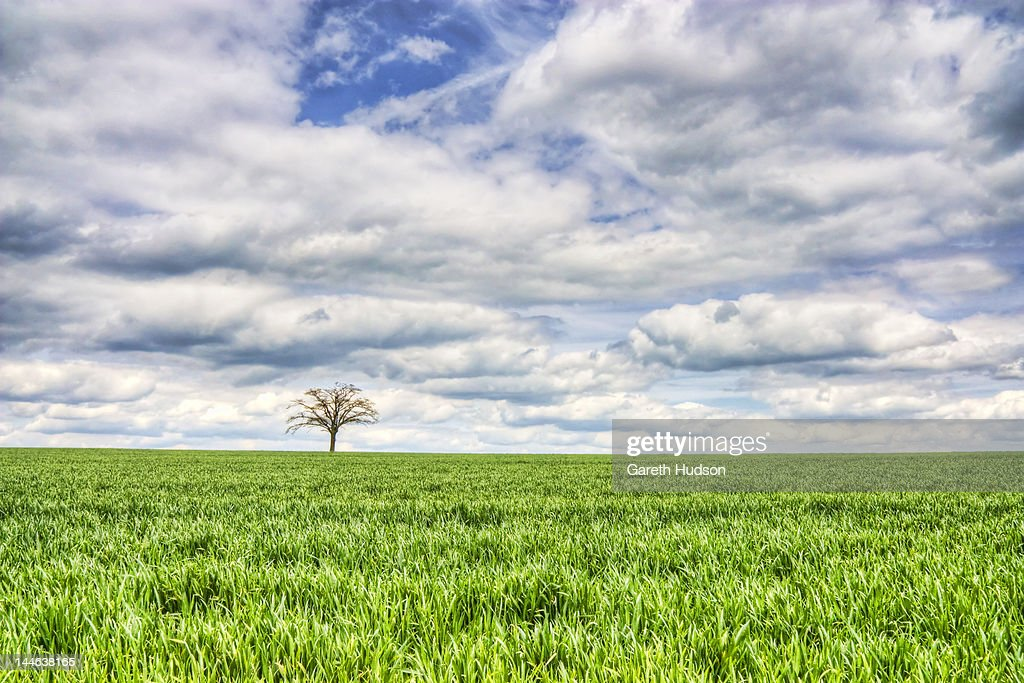 Solo tree on green horizon : Stock Photo