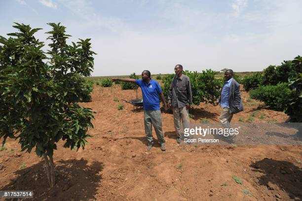 Somali elders inspect young citrus trees growing at a Farmer Field School organized by the Irish charity ConcernWorldwide as the Horn of Africa faces...
