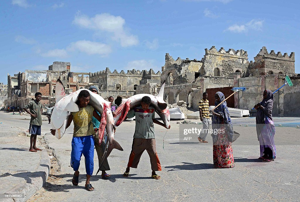 Somali fishermen carry sharks on their backs as they walk through the streets of Mogadishu on February 12, 2013. Due to the large population of sharks off the Somali coast, fishermen often catch sharks out to sea which are then sold at market. AFP PHOTO/Mohamed Abdiwahab
