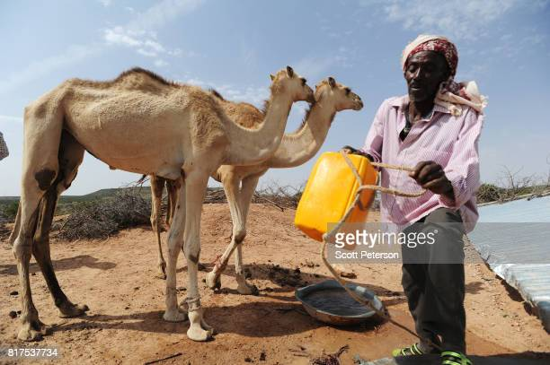 Somali herder Mohamed Abdi Madar pours water for two of his surviving camels at a traditional cistern for harvesting rainwater called a berkad made...