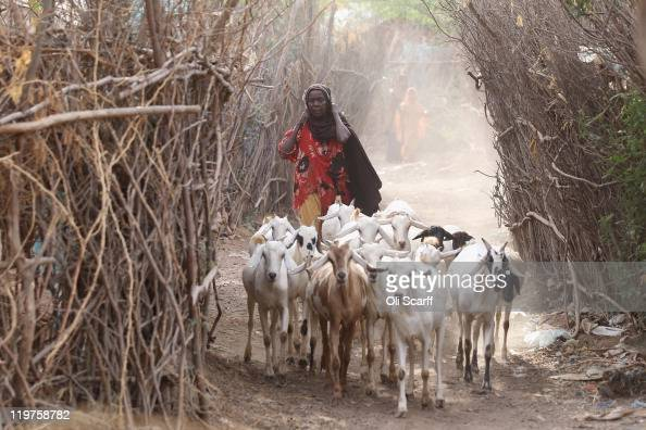 Somali refugee herds goats through the IFO refugee camp which makes up part of the giant Dadaab refugee settlement on July 24 2011 in Dadaab Kenya...