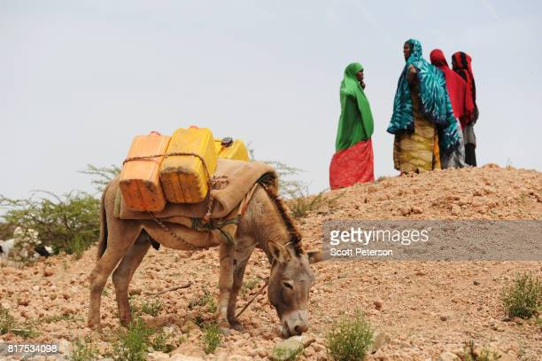 Somali women gather to fetch water at a traditional cistern for harvesting rainwater called a berkad made by the Irish charity ConcernWorldwide as...