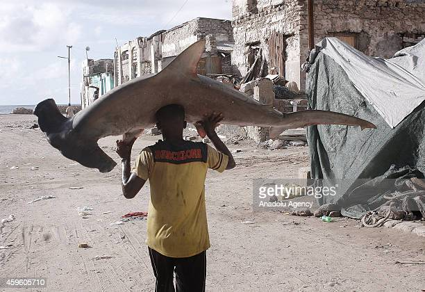 Somalian fisherman carries hammerhead shark on his head from the port to the fish market on the eastern Curubo beach of Somalian capital city...