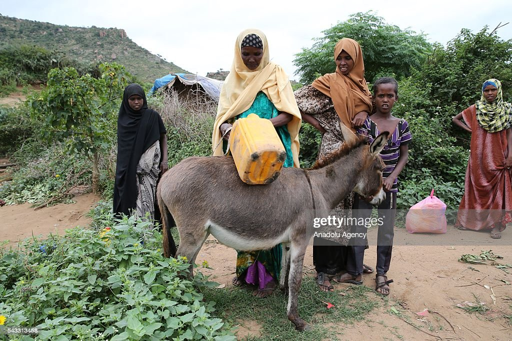 Somalian refugees living in the Erar region of Ethiopia's Harar city buckles empty water bottles on their donkeys before heading to city to get water as they face water shortage on June 26, 2016. Somalian refugees walk around 20 kilometers everyday to get water from the Harar and go back to their camps.