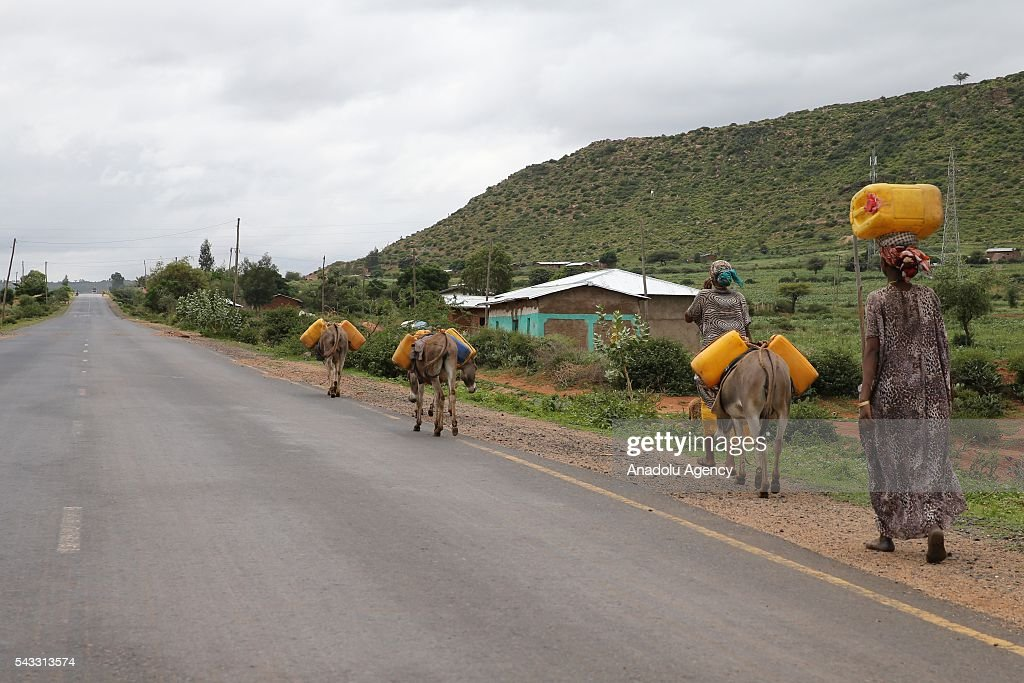 Somalian refugees living in the Erar region of Ethiopia's Harar city walk with their donkeys as they face water shortage on June 26, 2016. Somalian refugees walk around 20 kilometers everyday to get water from the Harar and go back to their camps.