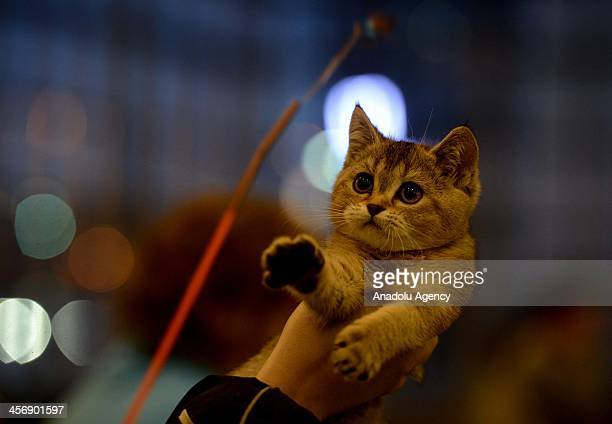 Some 20 breeds of cats and dogs are offered at a fair for Russians shopping for the new year in Moscow Russia December 15