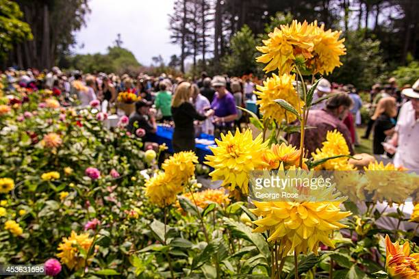 Some of nearly two thousand people attend Winesong a consumer wine tasting and auction held in the Mendocino Coast Botanical Gardens on September 7...