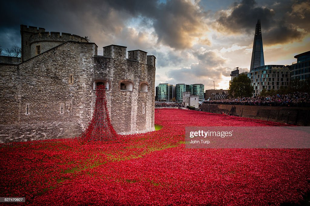 Some of the 888246 ceramic poppies planted for the Blood Swept Lands And Seas of Red exhibition marking the centenary of the start of World War One...