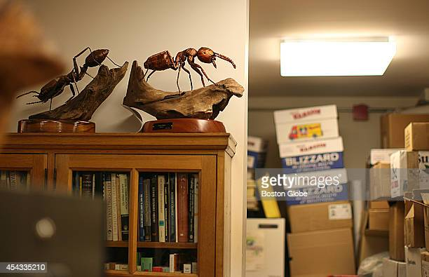 Some of the ant models in the office of biologist naturalist and writer EO Wilson in his Harvard office in the Museum of Comparative Zoology
